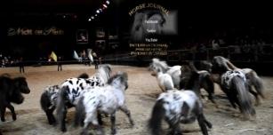 google-exclusive-com-film-promo-facebook-pferd-und-jagd-2016-nacht-der-pferde-ponys