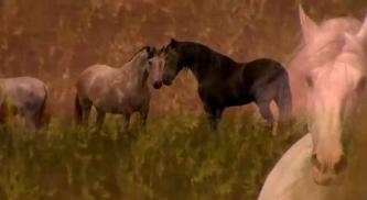 We LOVE Horses Vorschau http://bit.ly/2h4wIRr