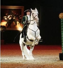 pferd-und-jagd-2016-horsejournalinternational-google-exclusive-com-besucher-aussteller-info-tagestipp-programm-barockreiten-termin