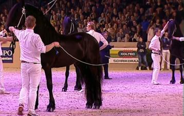 kfps-2017-hengstkoerung-friesian-stallion-championship-wct-leeuwarden-hengst-video-katalog-google-exclusive-royal-horse-expo-jurre-495-nane-492-148