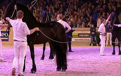 kfps-2017-hengstkoerung-friesian-stallion-championship-wct-leeuwarden-hengst-video-katalog-google-exclusive-royal-horse-expo-jurre-495-nane-492-148