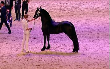 kfps-2017-hengstkoerung-friesian-stallion-championship-wct-leeuwarden-hengst-video-katalog-google-exclusive-royal-horse-expo-jurre-495-nane-492-154